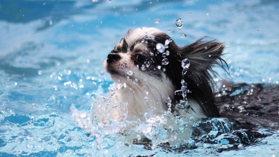 愛犬と旅行に行ってみては?わんわんナイトラグーナ 2020 SUMMER