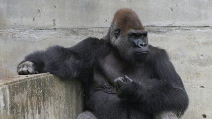 何度行っても楽しい★「東山動植物園」の様々な魅力をチェック♪