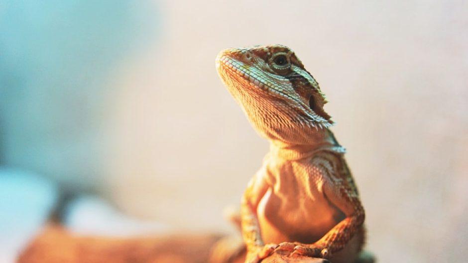 爬虫両生類の展示即売会「ナゴヤレプタイルズワールド2020」