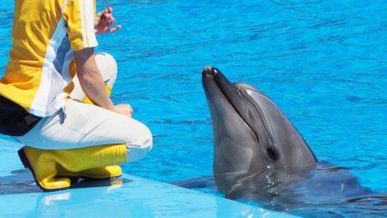 名古屋港水族館で水族館体験スクール『君もドリトル先生になれるか!』が開催
