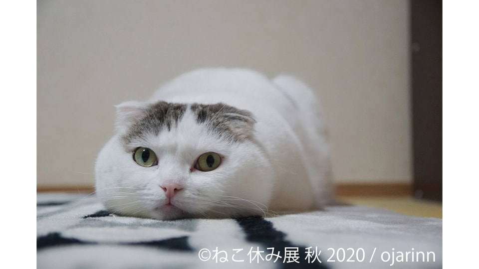 ねこ休み展 秋 2020