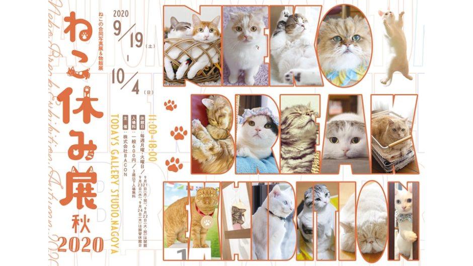 「ねこ休み展 秋 2020」が名古屋で開催!可愛い猫たちに癒されよう♡