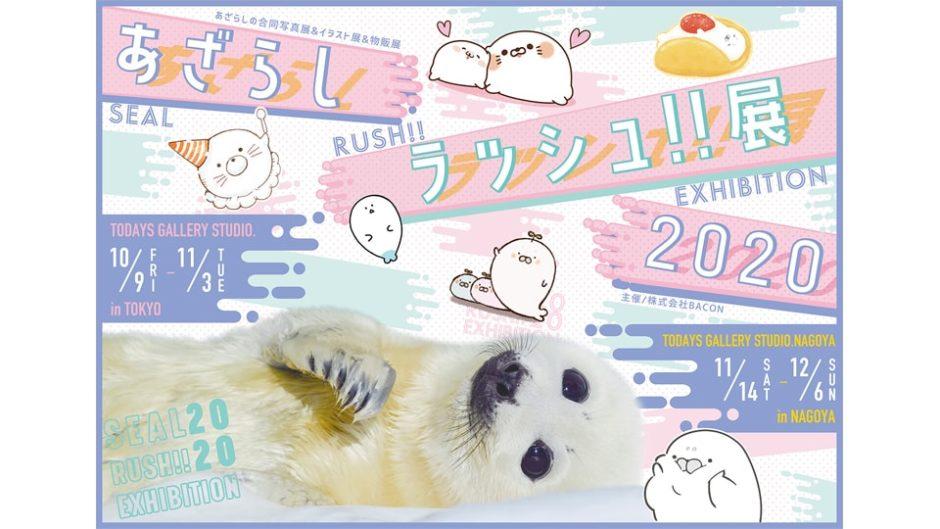 真っ白なふわふわがいっぱい「あざらしラッシュ!!展 2020 in 名古屋」