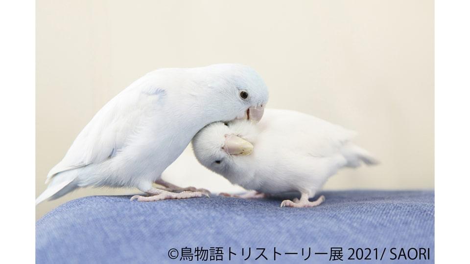 鳥物語トリストーリー展 2021 in 名古屋