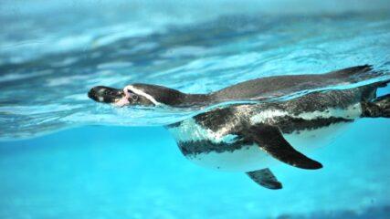 南知多ビーチランドで「ペンギンパフォーマンス」開催