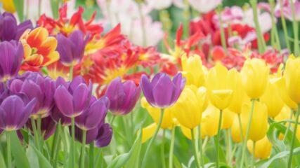 「浜名湖花フェスタ2021」花の名所を巡ってスタンプを集めよう!