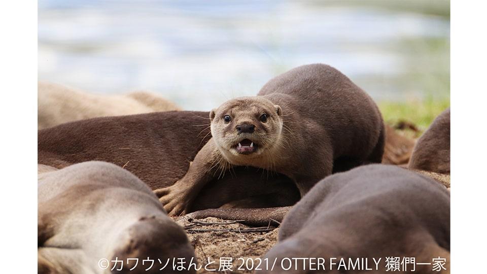 カワウソほんと展 2021 in 名古屋