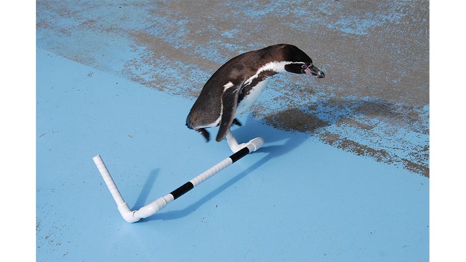 TOBAリンピック ~あつまれ!水中のアスリート~
