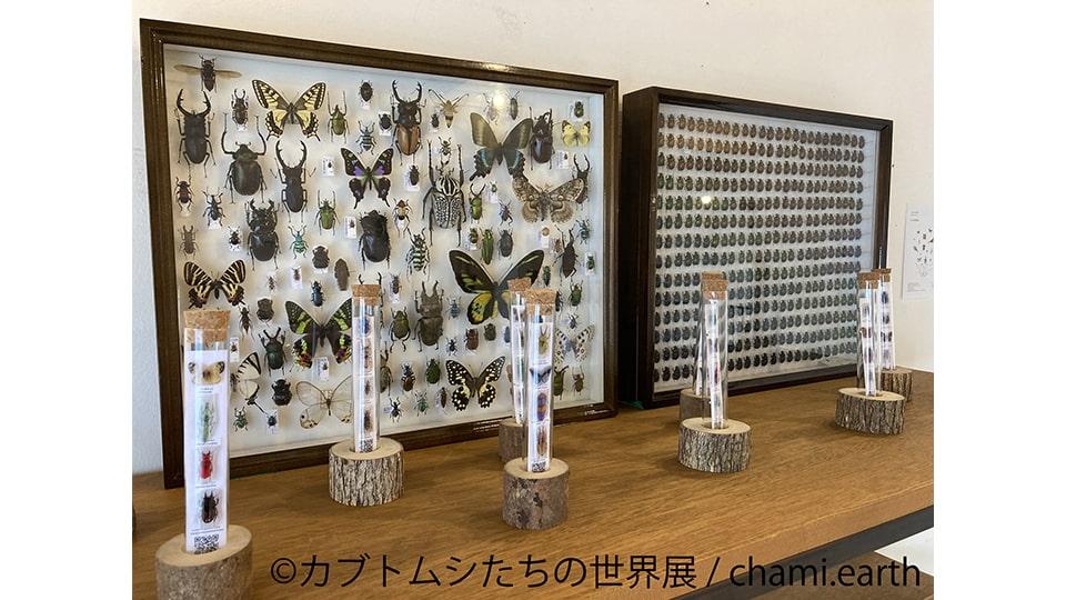 カブトムシたちの世界展 2021 in 名古屋