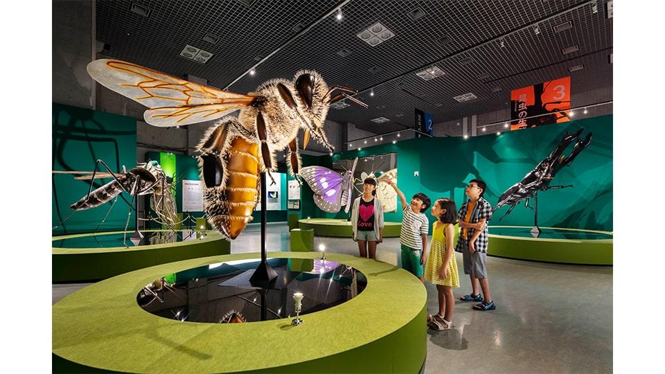 特別展 昆虫 名古屋市科学