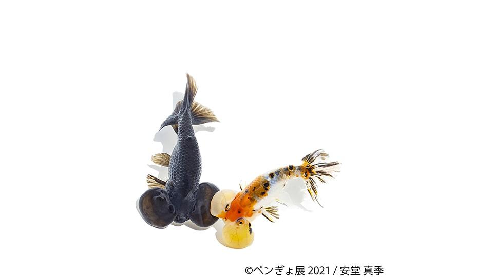 ペンぎょ展 in 名古屋
