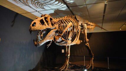 「ジュラシック大恐竜展」旧名古屋ボストン美術館で開催中!貴重な化石や迫力満点の恐竜ロボットが登場!