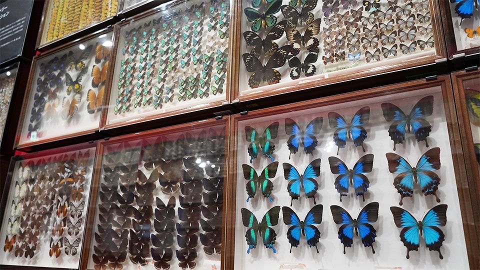 特別展 昆虫 名古屋