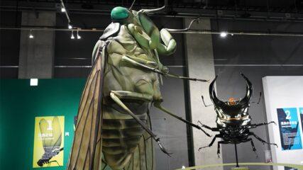 特別展「昆虫」名古屋市科学館で開催!巨大模型や昆虫標本などが登場!