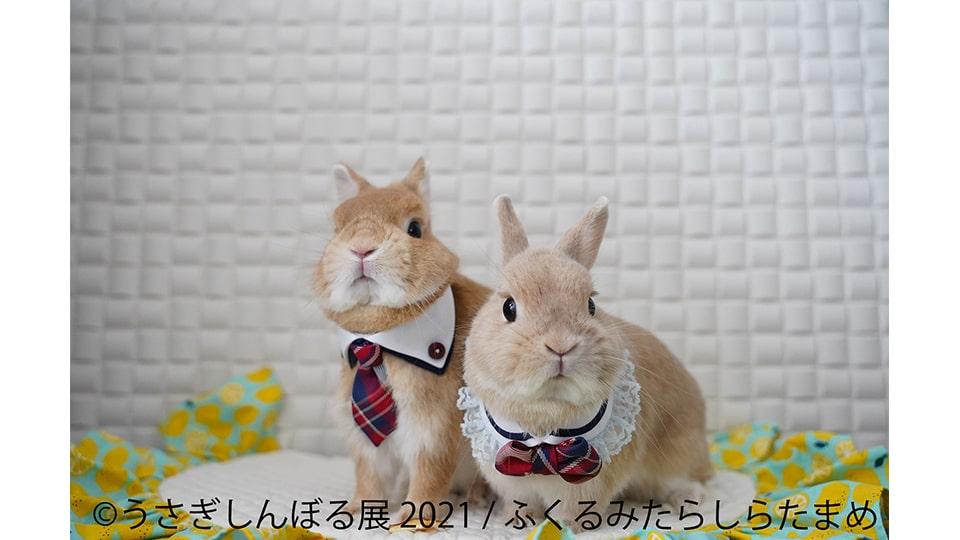 うさぎしんぼる展 2021 in 名古屋