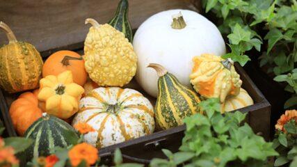 「デンパーク秋穫祭」はイベント充実!ハロウィン&秋グルメも登場