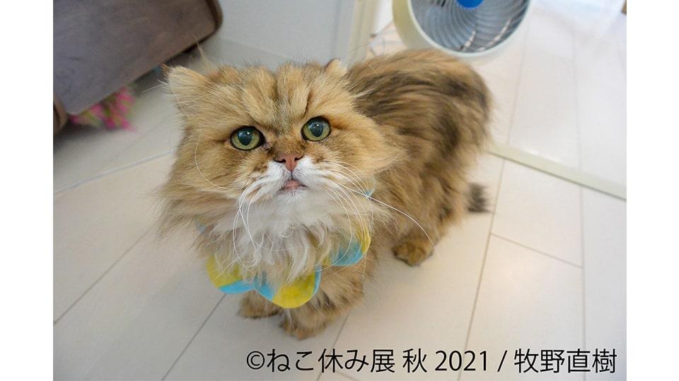 ねこ休み展 秋 2021